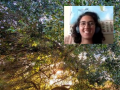 a Zoom window of a smiling naturalist pasted over a photo of an oak