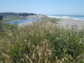 Coastal vegetation, with Salmon Creek and the Pacific Ocean in the distance