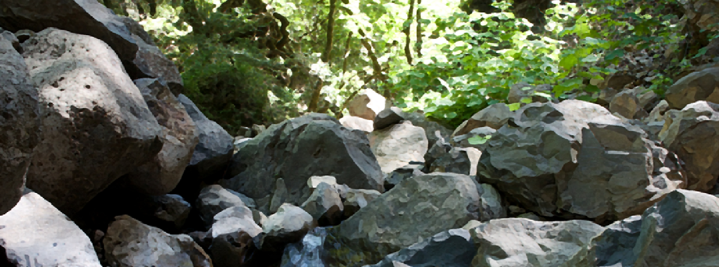 creek bed with boulders and trees